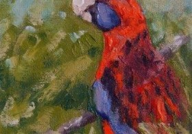 Crimson Rosella (Sold)
