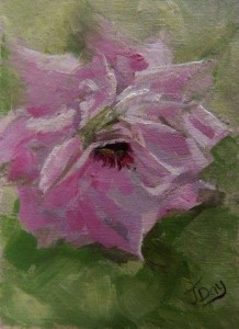 'Pink Rose' Daily Artwork No. 25